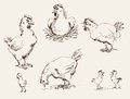 Hen and chicks set of vector sketches Stock Images