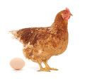 Hen and Egg Royalty Free Stock Image