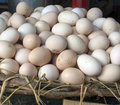 Hen Eggs stock Royalty Free Stock Photography