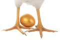 Hen feet with gold eggs Royalty Free Stock Images