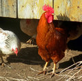 Hen house Stock Images