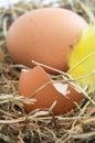 Hen's Nest - Vertical Orientation Royalty Free Stock Photo