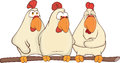 Hens cartoon the company of cocks sitting on a perch Royalty Free Stock Photo
