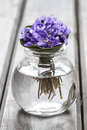Hepatica flowers pretty small bouquet house decoration Royalty Free Stock Photo