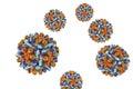 Heptitis B virus isolated on white background