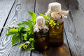 Herb bennett geum urbanum and pharmaceutical bottles medicinal plant wood avens bennet colewort st benedict s used in herbal Stock Photo