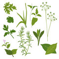 Herb Collection Stock Images
