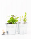 Herb containers variety of small herbs planted in metal Stock Image