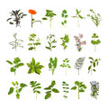 Herb Flower and Leaf Collection Royalty Free Stock Photo