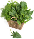 Herb fresh green in wicker basket on white background Stock Images