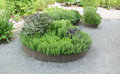 Herb garden herbs planted in circular raised bed Royalty Free Stock Photography