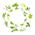 Herb Leaf Garlands Stock Photography