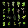 Herb Leaf Selection Royalty Free Stock Photo