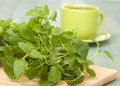 Herb lemon balm for tea and a cup on the table Stock Photos