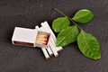 Herb for quit smoking stop harming himself by quitting clausena heptaphylla prong fah thai name murraya siamensis craib used as a Royalty Free Stock Photo