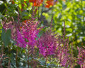 Herb sunlit plant with a blurred background of different colors Stock Photos