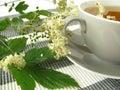 Herb tea with meadowsweet Royalty Free Stock Photos