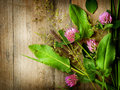 Herbal Background Royalty Free Stock Photo