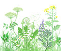 Herbal illustration
