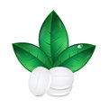 Herbal medicine pills and leaves on white background medical icon Royalty Free Stock Photography