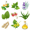 Herbal medicine plants icons for Stock Photography