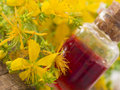 Herbal oil made of st john s wort close up shot plant and Stock Photo