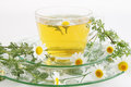Herbal tea of chamomile drug healing drink Royalty Free Stock Image