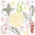Herbal tea. Vector sketch  illustration.