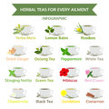 Herbal teas for ailment healthy food herb vector illustration Stock Photos