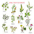 Herbal therapy for bronchitis ivy, ginger, mullein, agrimony, licorice, fenugreek, ginseng, ephedra, plantain, angelica