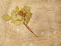 Herbarium on a old dirty canvas taken closeup Royalty Free Stock Photo