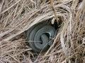Herbe-serpent Images libres de droits