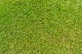 Herbe verte extérieure normale Photographie stock