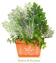 Herbes de Provence in Clay Planter Royalty Free Stock Photo