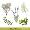 Herbes de Provence, mélange d'herbe Photo stock
