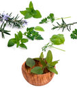 Herbs 001 Royalty Free Stock Image