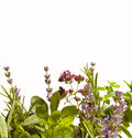 Herbs against white background Royalty Free Stock Photo