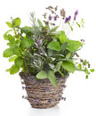 Herbs in a Basket Stock Photo