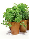 Herbs in clay pots isolated over white Stock Images
