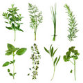 Herbs Collection Stock Images