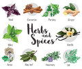 Herbs, condiment and spices with parsley, mint, rosemary, red basil, dill, anise, cinnamon, ginger, bay leaf, vanilla.