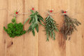Herbs drying hanging and of parsley sage rosemary and thyme on string line with ladybird pegs over oak wood background Stock Photography