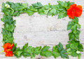 Herbs form a frame on wood leaf parsley and nasturtium Royalty Free Stock Photos