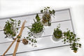 Herbs in Glasses on White Tray
