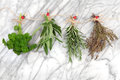 Herbs hanging and drying of parsley sage rosemary thyme on string line with ladybird pegs over marble background Royalty Free Stock Photography