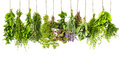 Herbs hanging isolated on white. food ingredients Royalty Free Stock Photo