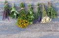 Herbs hanging on a leash various fresh Stock Photos