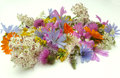Herbs health from nature and flowers Royalty Free Stock Photos