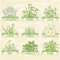 Herbs lavender chamomile chives garlic parsley dill sage and basil herbal vintage background Royalty Free Stock Photos