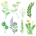 Herbs medicinal plants and weeds Royalty Free Stock Photo